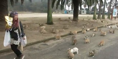 WATCH: Run For Your Life, It's A Bunch Of Adorable Rabbits! | Supply Chain Leaders | Scoop.it
