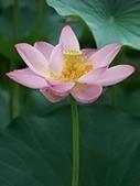 Mindfulness Meditation (MBCT Programme) | consciousness | Scoop.it