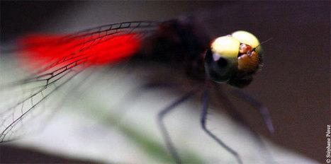 Le Muséum d'Histoire naturelle s'intéresse à la biodiversité amazonienne | Outre-Mer | Scoop.it