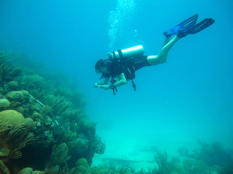 Air pollution casts a cloud over coral reef growth | In Deep Water | Scoop.it