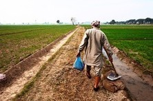 India's Green Revolution Is Stunted as Fertilizer Subsidy Backfires | AP Human Geography | Scoop.it