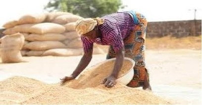 Ghana News - Government allocates rice production targets to regions | NEPAD CAADP Compendium on Agriculture in Africa | Scoop.it