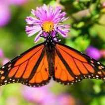 Plant a Container Garden for Butterflies | garden farm | Scoop.it
