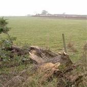 Shepherd Neame announces plans to build 63 homes near Brogdale Road ... - Kent Online   Kent County UK   Scoop.it