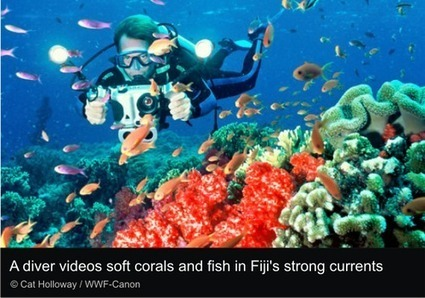 Three Tips for Diving Without Wrecking Reefs | Ocean News | Scoop.it