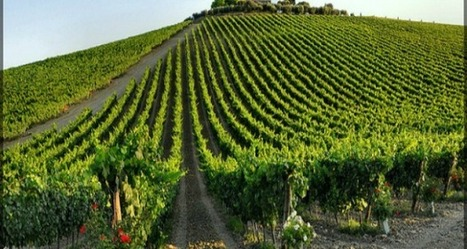 Are you a wine lover? | Gusto Wine Tours - Umbria | Scoop.it