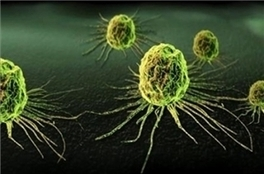 """Nanotechnology Now - Press Release: """"Iranian Scientists Use Artemisia Annua Plant to Produce Breast Cancer Drugs"""" 