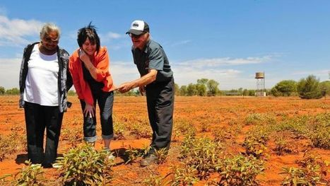 Supermarket invests in Indigenous food products | Australian Plants on the Web | Scoop.it