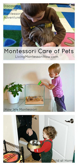 Montessori Care of Pets | Montessori Inspired | Scoop.it