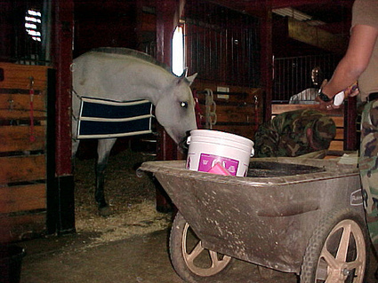 Animal Health Foundation: Laminitis Research : How to Prevent Laminitis, Rule #1: Video Evidence Why Horses Are at Risk | Laminitis News | Scoop.it