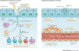 Interleukin-33 in health and disease : Nature Reviews Immunology : Nature Research | Osteoporosis New drugs Review | Scoop.it