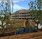 Het grootste Urban Farming Dak van Europa, in Amsterdam - Duurzaamnieuws.nl | Eetbare Stad | Scoop.it