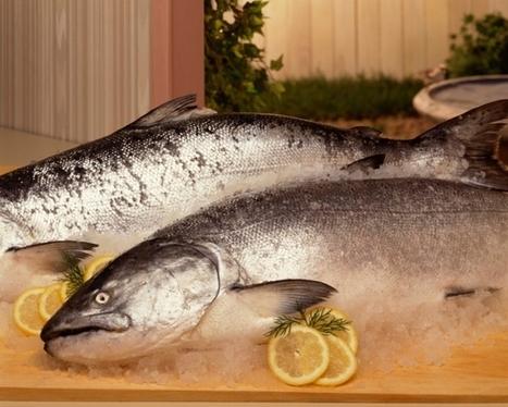 Saumon : Que contient le saumon? | Gastronomie et alimentation pour la santé | Scoop.it
