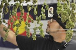 Medical pot initiative would legalize use in San Jose, establish city commission - Silicon Valley Business Journal | Pain Killer the weed | Scoop.it