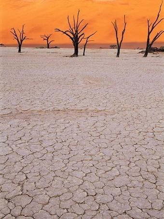 Desert Threats, Endangered Species - National Geographic | Hot Desert | Scoop.it