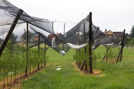 Agroalimentaire: l'idée d'une TVA climatique - Le Figaro | Le Fil @gricole | Scoop.it