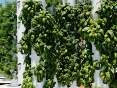 Grocery's rooftop garden a supermarket first | Vertical Farm - Food Factory | Scoop.it