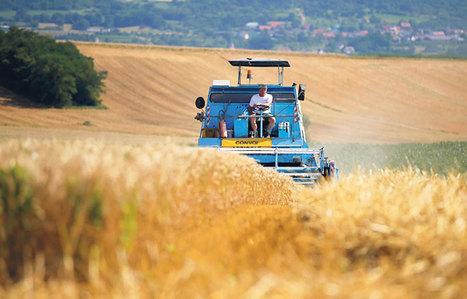 Agriculture : les mauvaises récoltes fragilisent la filière de blé bio - leJDD.fr | Agriculture bio | Scoop.it