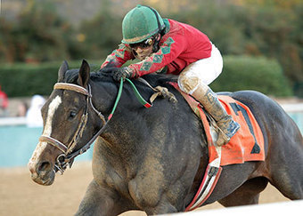 Mott has Florida-breds ready for Breeders' Cup Classic | Horse Racing News | Scoop.it