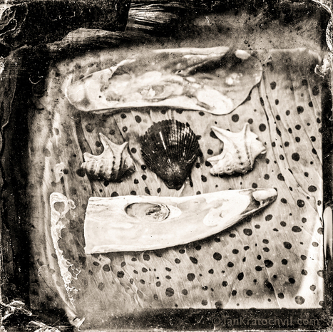 something from the sea on the wet plate collodion kolodium by www.jankratochvil.com   Wet Plate Collodion Photography   Scoop.it
