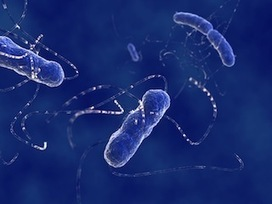 7 Things You Had No Idea Gut Bacteria Could Do | Gut Health | Scoop.it