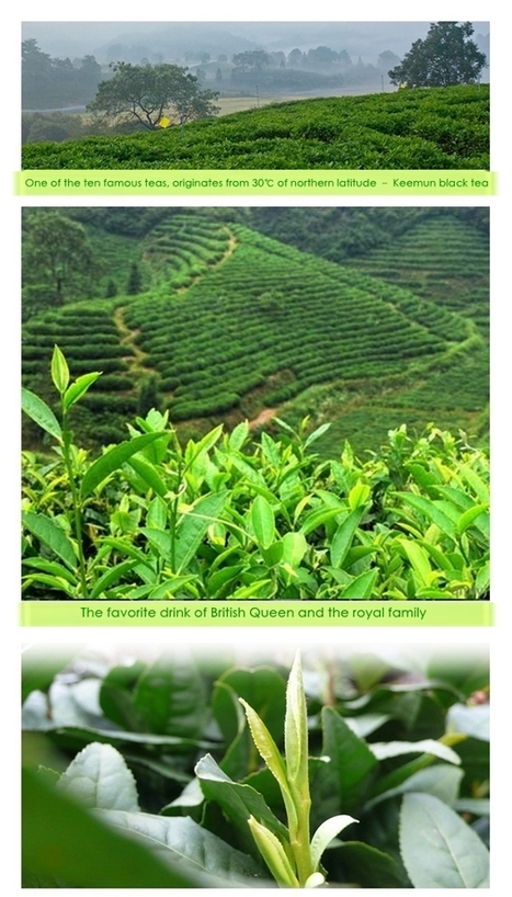 Yingkesong premium gourmet tea gift tea Keemun effort QI 500g | Black Tea | Scoop.it