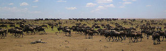 Climate change - effects on animals | Masony1 | Scoop.it