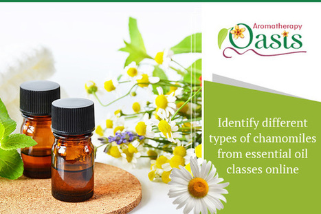 Identify different types chamomiles from essential oil classes online | Aromatherapy | Scoop.it