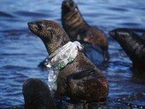 Oceans versus Plastic   Info Junkie   Scoop.it