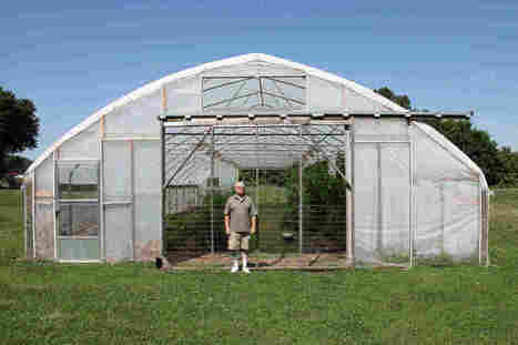 Farmers Enlist Chickens And Bugs To Battle Against Pests | Organic Farming | Scoop.it