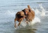 Dog lovers, your long wait is almost over | Where can I take my dog to the beach? | Scoop.it