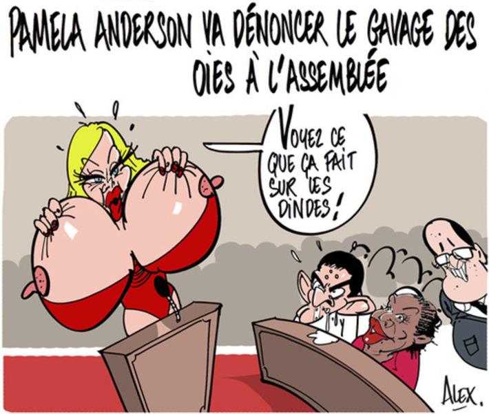 Pamela Anderson va dénoncer le gavage des oies à l'assemblée | Baie d'humour | Scoop.it