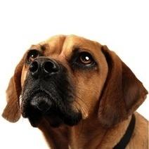 La dominance chez le chien : une fausse croyance ? - Wamiz   Education canine   Scoop.it