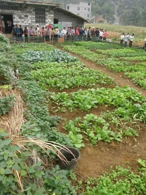 For Food Security, China Tries an Alternative to Industrial Agriculture | Solutions | Biodiversity IS Life  – #Conservation #Ecosystems #Wildlife #Rivers #Forests #Environment | Scoop.it