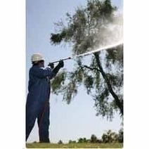 Apple Tree Spray Oil | Organic Fruit Tree Spray Oil India | Website Design Company | SEO Services Delhi | Web Development | Scoop.it