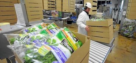 McDo décide de mettre le paquet sur les salades Florette - Ouest France | Agriculture en Pays de la Loire | Scoop.it