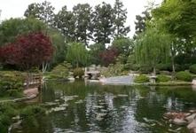 Earl Burns Miller Japanese Garden reaches full maturity - Daily 49er | Japanese Gardens | Scoop.it