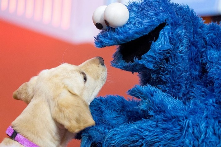 Cookie Monster Puppy Love | Walking On Sunshine | Scoop.it