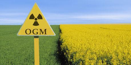 OGM : la Commission européenne gèle les autorisations de culture | Cancer et environnement | Scoop.it
