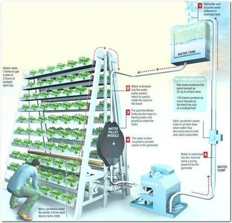 Vertical Farming: Singapore's Solution to Feed the Local Urban Population   Zero Footprint   Scoop.it