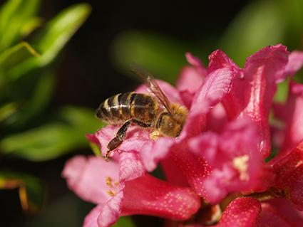 Avec la génomique, la pollinisation dévoile ses réseaux | Cette nature qui nous soigne | Scoop.it
