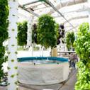 Future Farming: How High Tech Aquaponics Makes Food Right   Vertical Urban Agriculture   Scoop.it