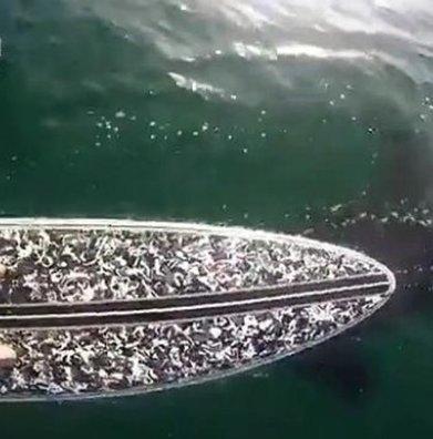 Insolite: Un homme tombe sur un orque en faisant du stand up Paddle ! - Cotentin webradio actu buzz jeux video musique electro  webradio en live ! | cotentin webradio Buzz,peoples,news ! | Scoop.it