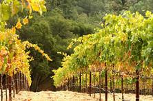 From Big Wins to Big Wines | Vitabella Wine Daily Gossip | Scoop.it