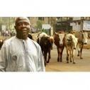 Accords de partenariat économique et agriculture : quels enjeux pour l'Afrique? | Questions de développement ... | Scoop.it