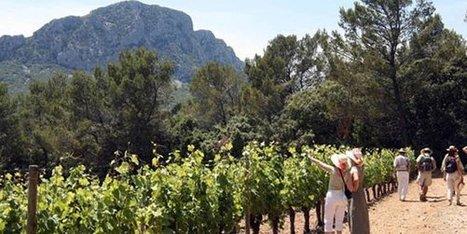 « Terres du Midi », une nouvelle IGP pour la région Languedoc Roussillon Midi-Pyrenées ? | Marketing - Vins et spiritueux | Scoop.it