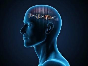 Muchos de los genes que influyen en la personalidad también inciden en nuestra salud mental   Artículos de divulgación científica   Scoop.it