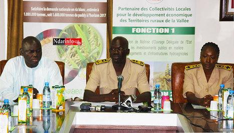 SENEGAL: RIZICULTURE DANS LA VALLEE du FLEUVE: Le DG de la SAED annonce une «  campagne agricole historique ». | Afrique: développement durable et environnement | Scoop.it
