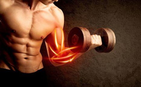 Des muscles artificiels grâce à un polymère élastique | les sciences de lestoile | Scoop.it