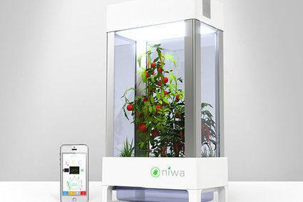 Niwa, armoire hydroponique connectée pour faire pousser à l'intérieur | Connected-Objects.fr | Hightech, domotique, robotique et objets connectés sur le Net | Scoop.it